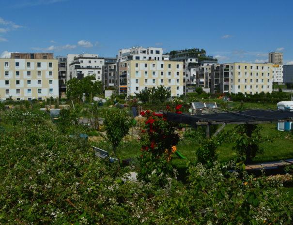 Gemeinschaftsgärten Seestadt