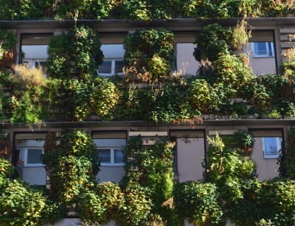 klimafreundliche Fassadenbegrünung in Wien